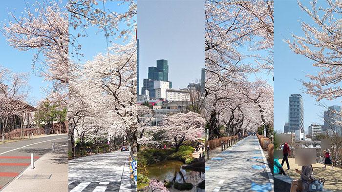 赤坂周辺の「お花見スポット(桜の名所)」一覧全5選